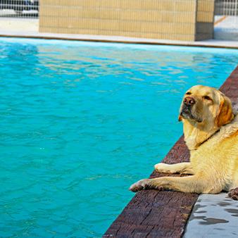 大型犬歓迎!愛犬の為のこだわりドッグプール